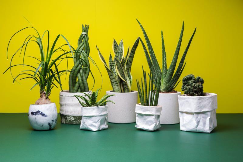 Bureau Patio, tout l'univers des plantes succulentes à portée de main