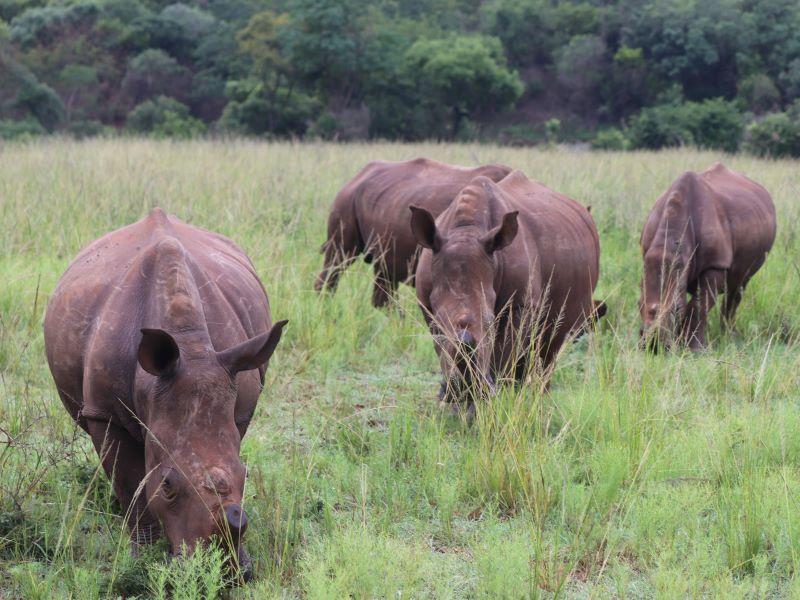 Journée mondiale du véganisme : Maria Nila s'engage pour la protection des rhinocéros menacés d'extinction