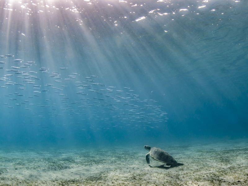 «Ode à l'Océan» par No More Plastic Kids pour la Journée de l'Océan